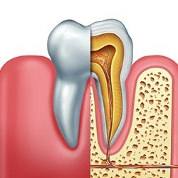 illustration of tooth roots